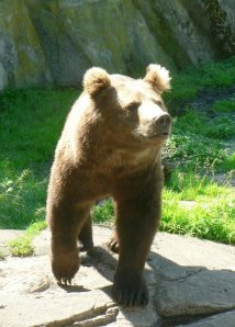 Medved je osamljen