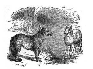 Volk in jagnje iz Ezopovih basni