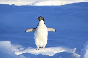 pingvin-slika