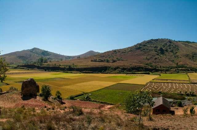 slika-rizevega-polja-na madagaskarju